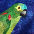 Patch Figurativo - Papagaio (12/04/2019)